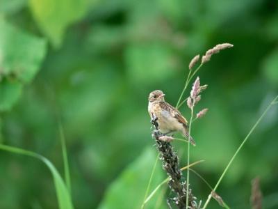 Bird Mix 015