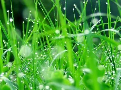 wallpaper green leaves. Green leaf water drop 11
