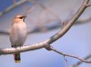 Birds Wallpapers :: Bird Mix 074