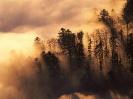 France-Woodland in Mist Vosges