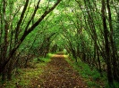 Ireland-Rossacroo-na-loo Wood Near Kilgarvan County Kerry